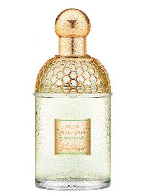 Aqua Allegoria Herba Fresca Guerlain para Hombres y Mujeres