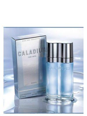 Caladium Yves de Sistelle para Hombres