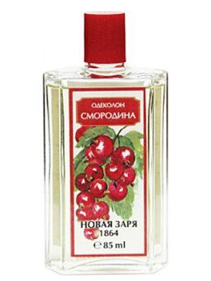 Smorodina Novaya Zarya para Hombres